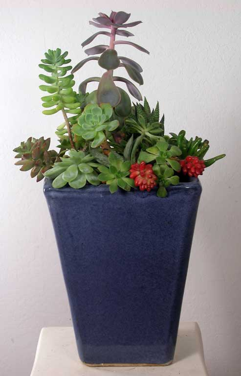 "Succulent Arrangement in square container, 9"" tall"