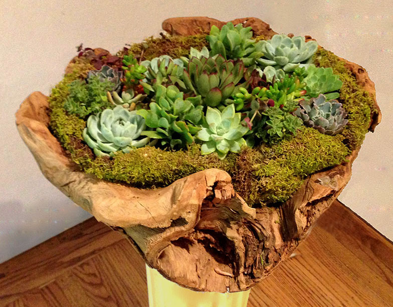 Mixed Succulents Arranged in Driftwood