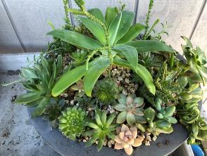 angiosperm succulents, leaves, stems in round holder
