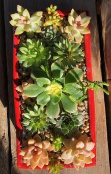 succulents rectangular red container, green flowers