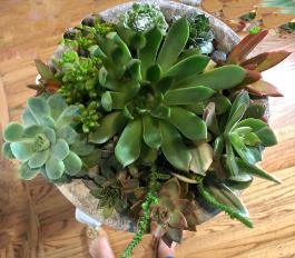 succulents in roundclay container