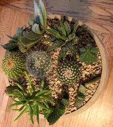 cactus arranged in gravel bed february