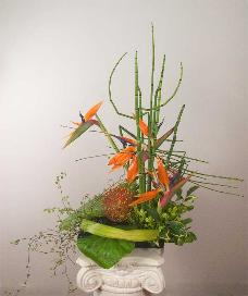 Birds of Paradise with pin cushions ikebana, delivered to Tiburon.