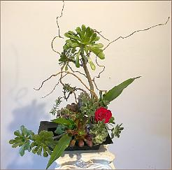succulent ikebana with red flower