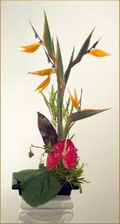 bird of paradise ikebana arrangement anthurium