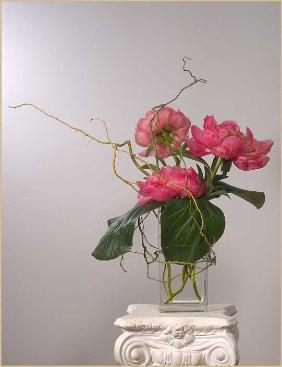 peony curly willow: