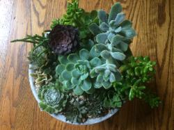 succulents mixed in round holder