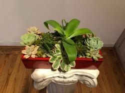 succulents in temple red container