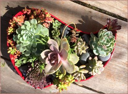 Succulents in Valentine's Arrangement - untraditional