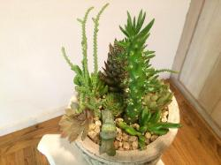 succulent arrangement