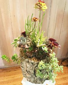 succulent tree bark container
