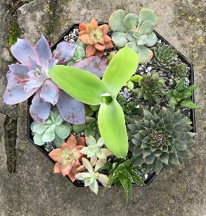 succulents in octagonal container