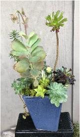 vertical succulents arranged in 9.5 inch clayholder