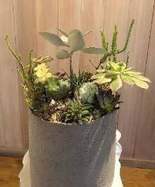 succulents in round tall container