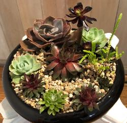 succulents in round black holder with gravel